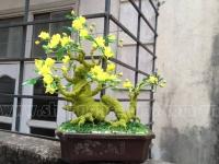 Gốc Bonsai mai đào - Thế  Rồng xanh - Mã TR1