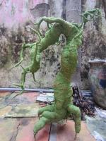 Gốc Bonsai mai đào - Thế Thác Đổ - Mã: TL 1
