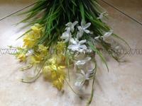 Cỏ hoa lan