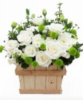 Lãng hoa đẹp 01