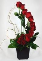 Lãng hoa đẹp 05