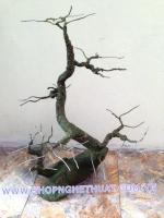 Gốc Bon Sai Mai Đào Gỗ - Mã GS6