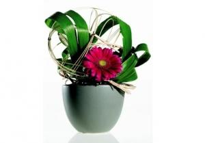 Bình hoa cực đẹp chỉ với một bông