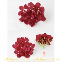 Hoa sáp cẩm tú cầu
