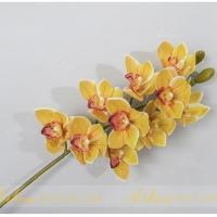 Hoa địa lan cao su HL002