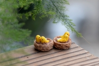 Tổ chim mini
