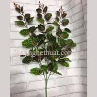 Cụm dài bạc hà lá đỏ