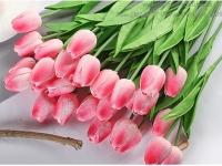 Cành Hoa Tuy Líp