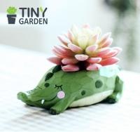 Chậu trồng cây - cá sấu