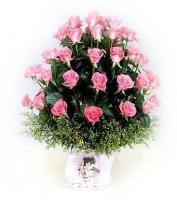 Lãng hoa đẹp 04