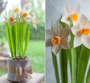 3 bước làm hoa thủy tiên đầy sức sống