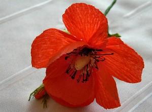Bình poppy từ giấy nhún lung linh long lanh