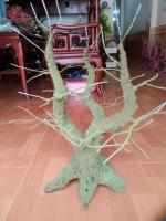 Gốc Tam Đa cỡ Lớn (80cm)