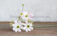 Hoa cúc bướm HL057